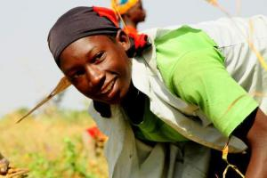 """Nice Vision"": Growing Africa's agribusiness…"