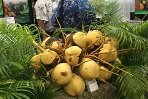 The potential of the ordinary coconut